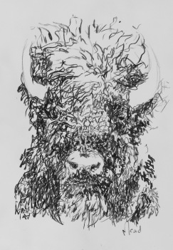 Bison, 2017 Monotype 22 x 15