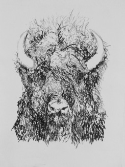 Bison, 2017 Monotype