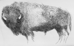 Mead_Bison_2017_40x26_litho crayon on paper